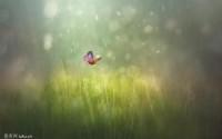 关于花叶的句子 关于花与叶的唯美句子