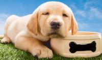 描写狗狗的写实句子